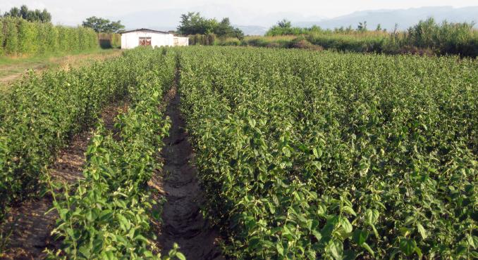 farmhellas-fitorio